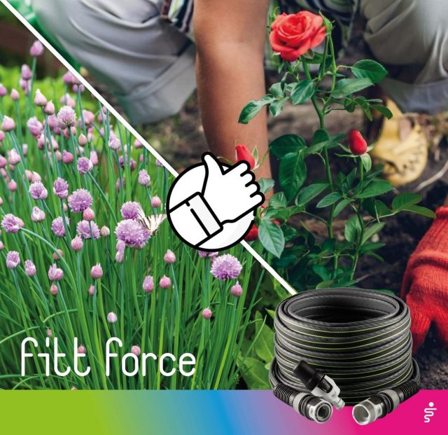 Associations are very useful for consistently healthy plants: placing some plants close to each other brings them mutual advantages. Find out which plants should be close together and why. Chives can help repel rose pests. 🌹  #FITT #FITTgardeningideas #FITTForce #poweryourjob #watering #gardeninspiration #gardeningtips #gardeninglife #gardeninglove #gardeningisfun #gardeningismytherapy #gardeningknowhow #gardeninggoals #gardeningmeakesmehappy #companionplanting #roses #chive #parassites
